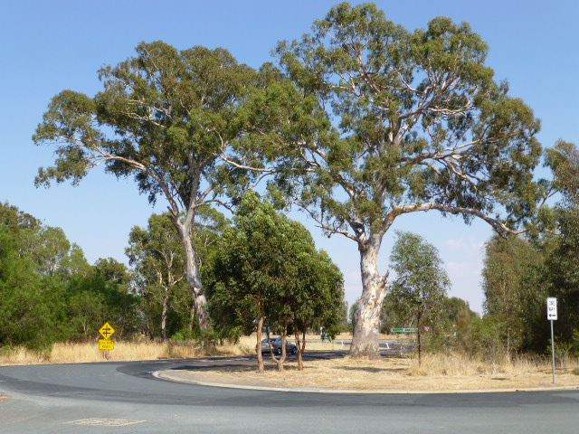 We saw these beautiful gums at our mid-morning stop on Wednesday