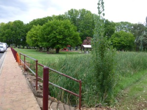 Park at Coonabarabran complete with Geese