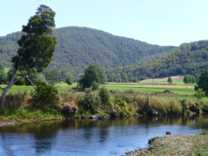 Lush Grazing near the Leven River