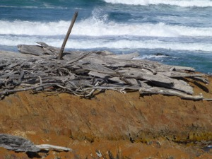 Driftwood Near Mouth of Arthur River