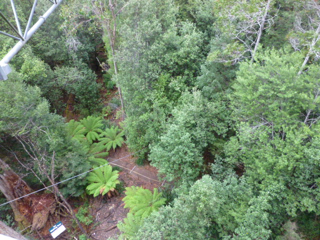 The Forest Floor as seen from the AirWalk Platform