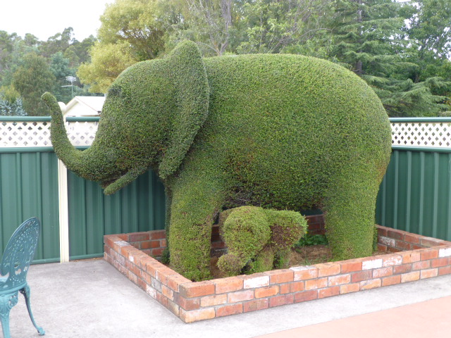 More Topiary in Railton