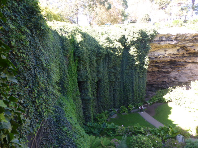 The Wall of Hanging Ivy in the Sinkhole