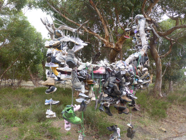 The Shoe Tree on the way to Cummins