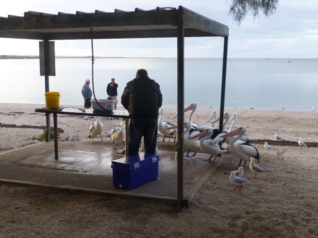 The Fish Cleaning Area at Streaky Bay Caravan Park