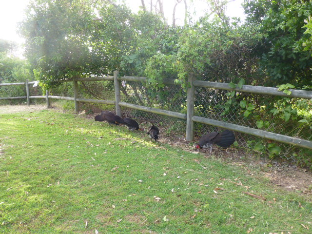 Some residents of the Caravan Park at Sawtell
