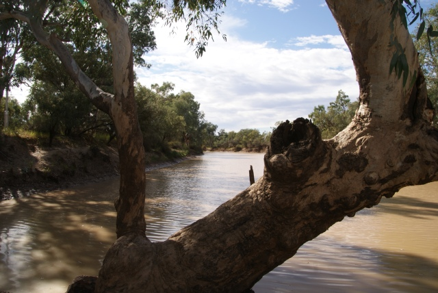 A view of the Bulloo River at Thargomindah