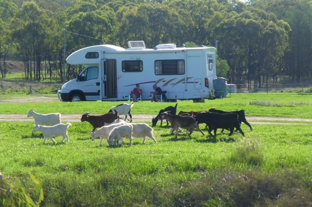 Some Other Residents at the Leyburn Camping Area