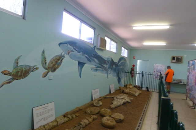 The Marine Fossil Exhibit at the Boulia Stonehouse Museum