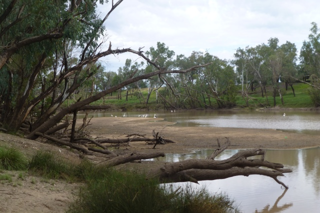 The Balonne River at Riversands Winery