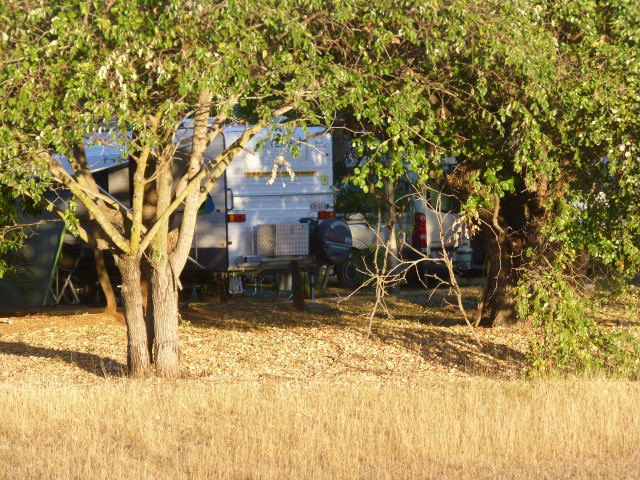 Chinee Apple Trees at the back of the caravan park