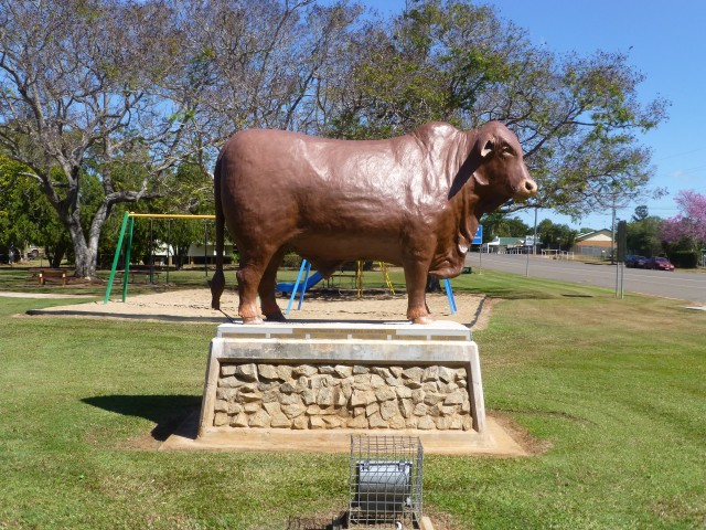 Australia's own - Droughtmaster Bull Statue