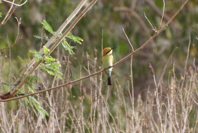 Pretty bird at Morehead River Rest Area