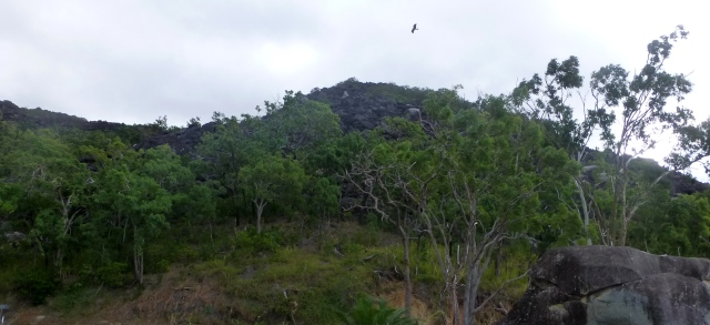 Black Mountain at Cooktown