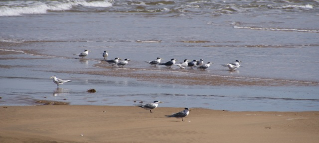 We disturbed these sea birds as we approached Middle Creek