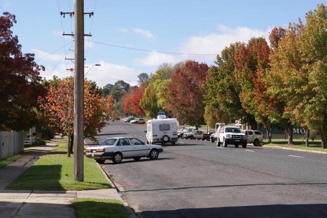 Street trees in Walcha