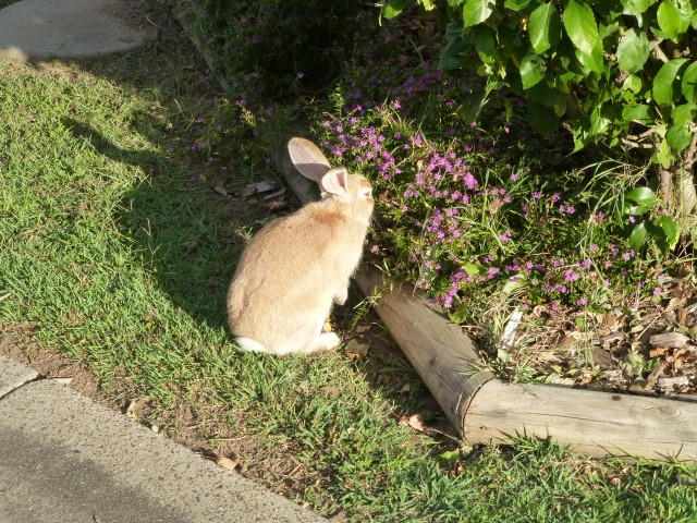 Rabbits galore