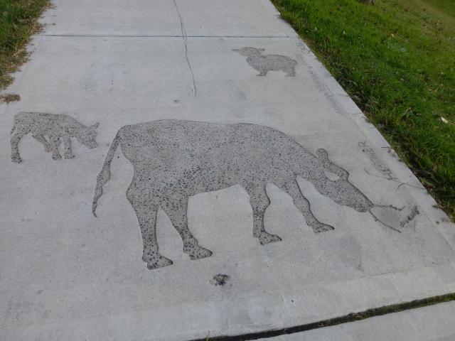 Footpath imprints in Walcha