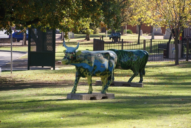 Mooving Art cows at Murchison