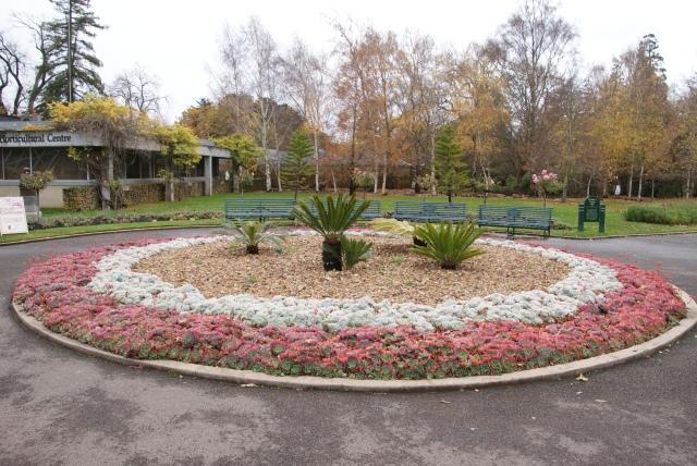 A garden of succulents at Ballarat