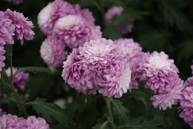 Lovely flowers at Ballarat