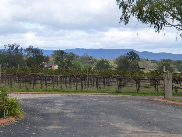 The vineyard at Farmer's Daughter Wines