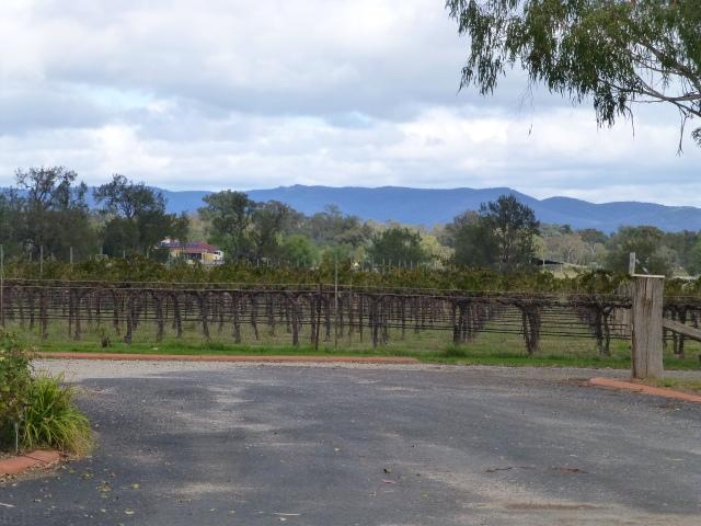 The vineyard at Farmer's Daughter Wines