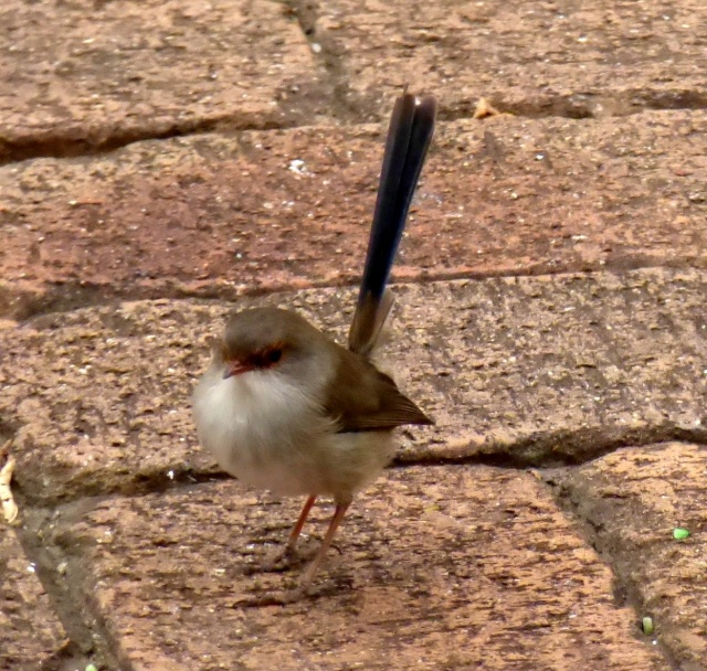 Small wren at Small Producers establishment