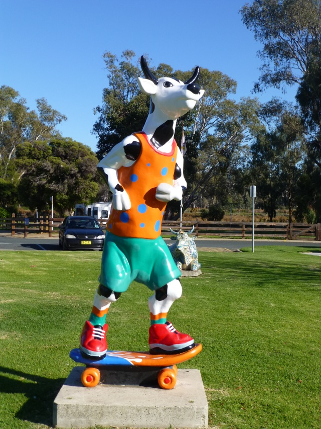 Skateboarding cow at the front of the caravan park at Shepparton