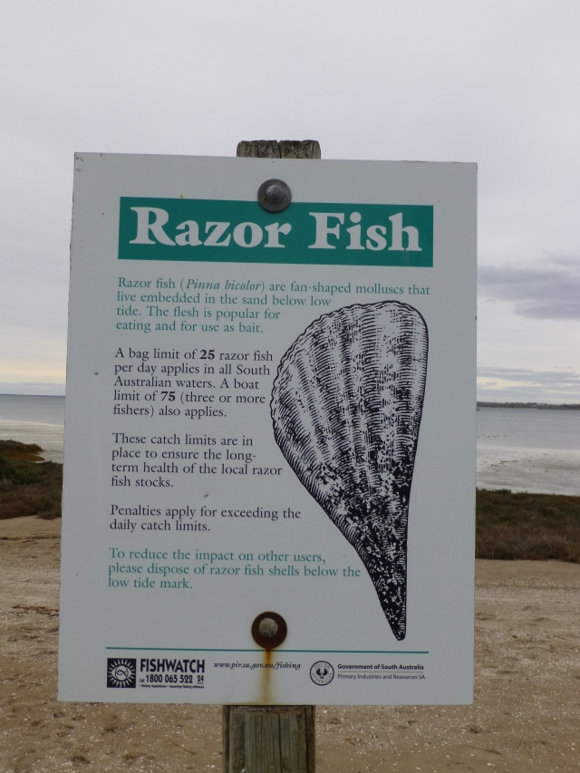 Disposal of the shell of Razor Fish is a problem on the beach