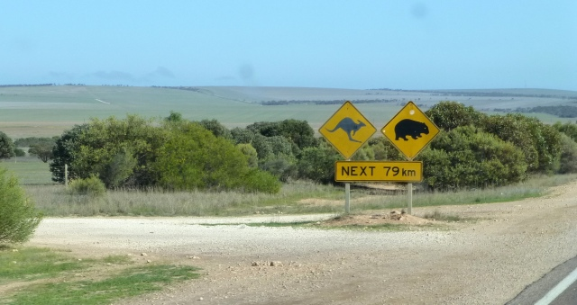 Kangaroos and Wombats use the road
