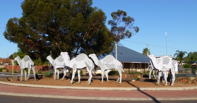 Camel memorial near the Post Office in Norseman