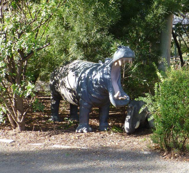 Hippo at Kojonup Caravan Park