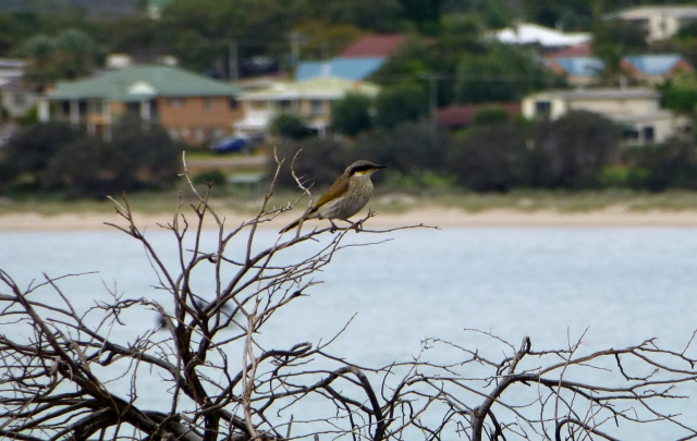 This little fellow was keeping on eye on us at Kalbarri