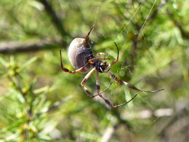 Busy spider at Ross Graham Lookout
