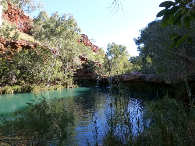 Fern Pool in Dales Gorge