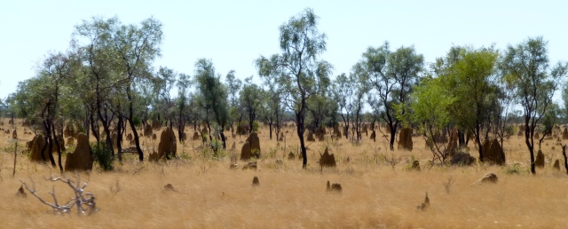 Lots of ant hills along the way to Derby