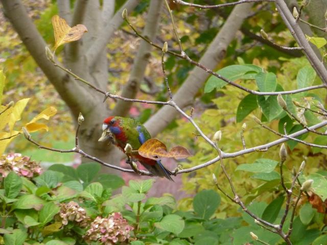 Beautiful birds at Mayfield Gardens