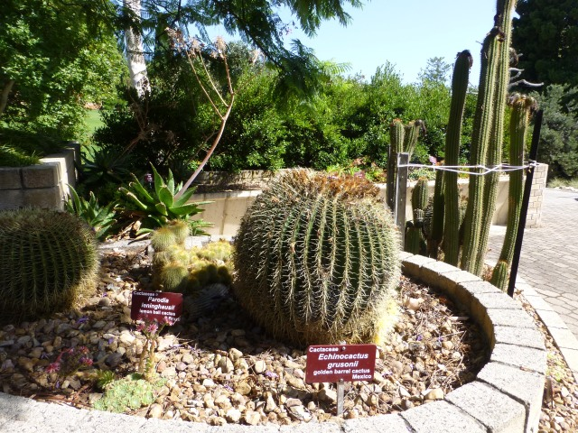 Cacti at the Hobart Gardens