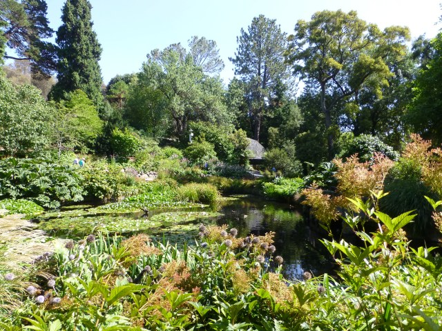 A Lilly lagoon at the Hobart Gardens