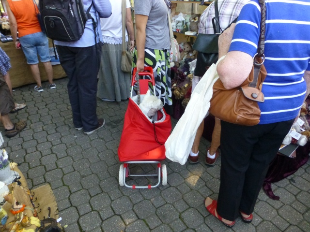 Little dogs get to ride about at Salamanca Market