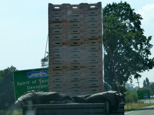 An impossible stack of strawberry boxes tied precariously to the back of this utility and holding up traffic along the way