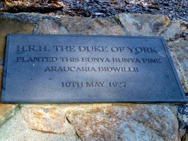 Duke of Yorke planted the tree